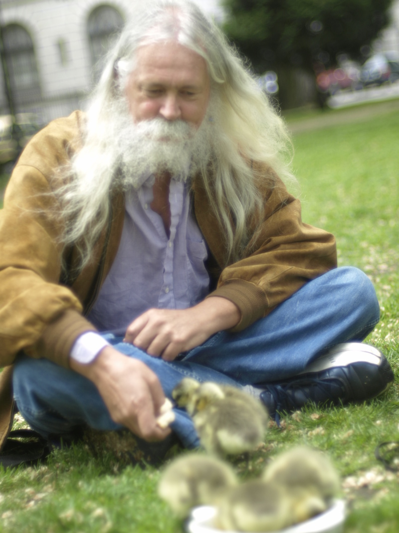 Canada Goose goslings and me